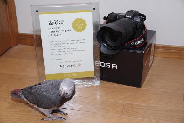 K_1N1185.jpg